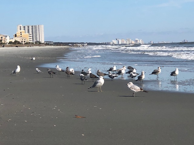 Bird reunion...