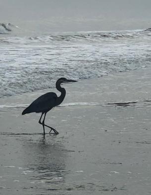 Heron on the beach...