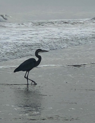 Heron on the beach...