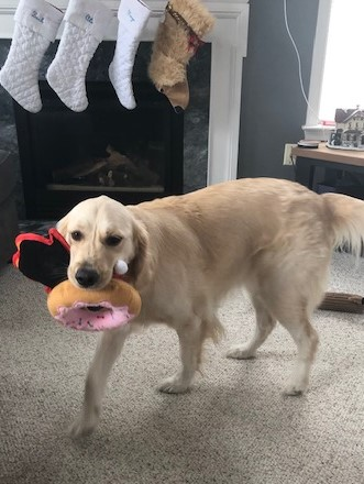 How many toys can I hold in my mouth?
