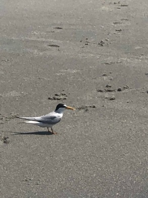 I love the beach birds...