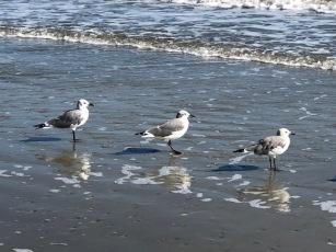 3 birds...3 sisters!