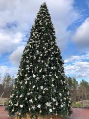 Mount Ida tree!