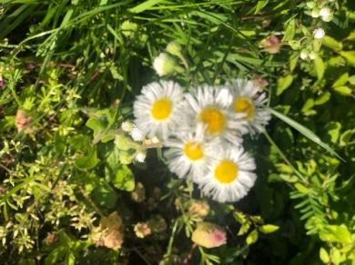 Sweet flowers...