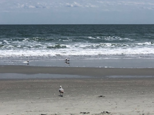 Yep... there are my beach birds!