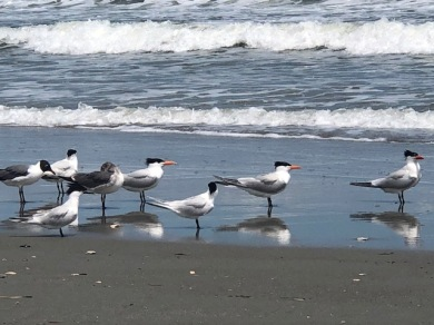 Love the beach birds....