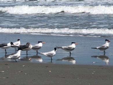 Love the beach birds....