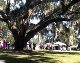 Oh the Spanish moss at the Garden Party!